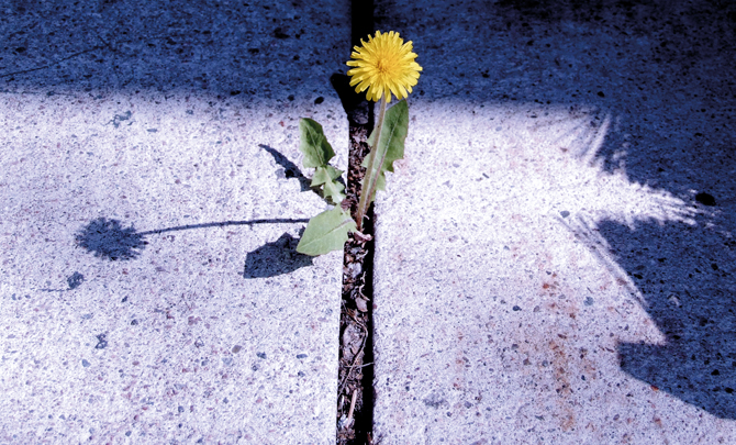 Community-minded: Hope in dandelions
