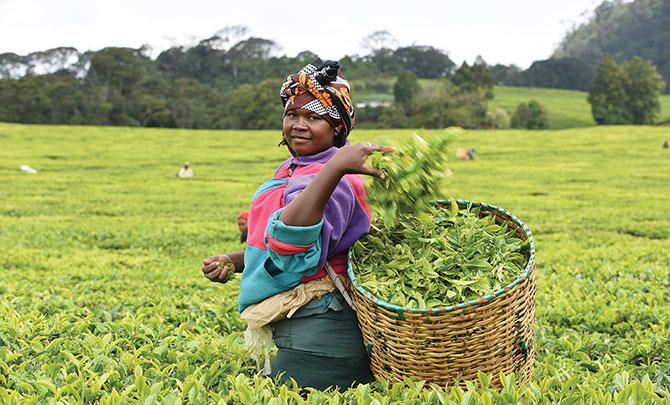 A life in fair trade